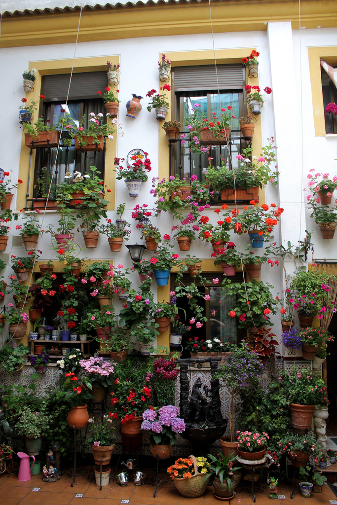 Patio cordobés (Córdoba)