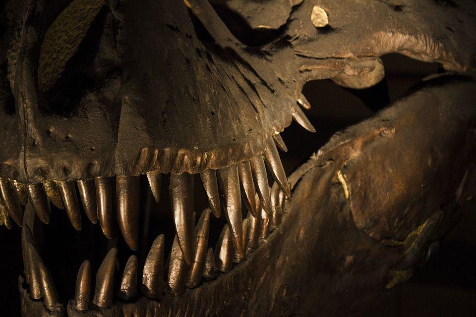 museo de historia natural de londres 3 - esqueleto dinosaurio