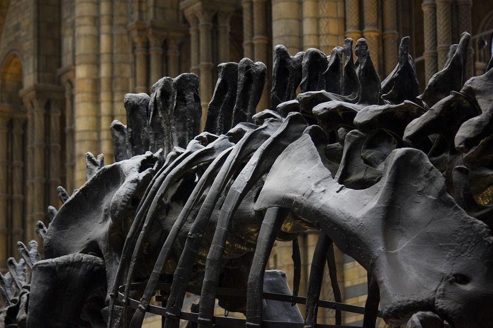 museo de historia natural de londres 4 - esqueleto dinosaurio
