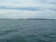 ria de arousa ria de arosa 12 - costa norte