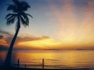 Ko Samui (Tailandia) - Playa