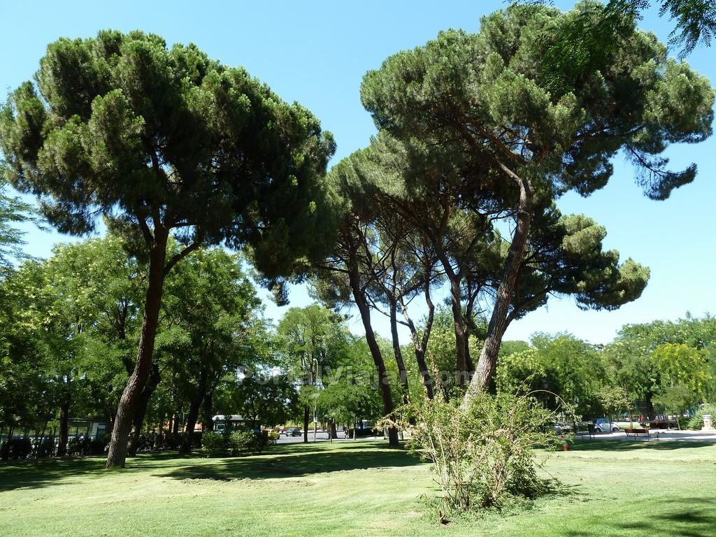 madrid - parque de atenas 1