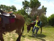 Ruta 179 Rutas en burro en Mataelpino