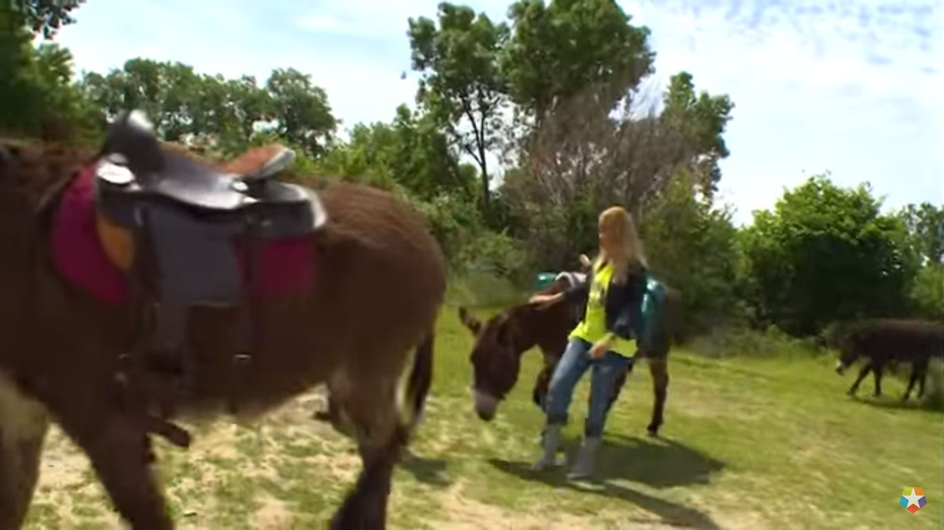 Ruta 179: Rutas en burro en Mataelpino
