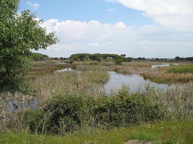 Parque de Doñana - Lagunas de el Acebuche