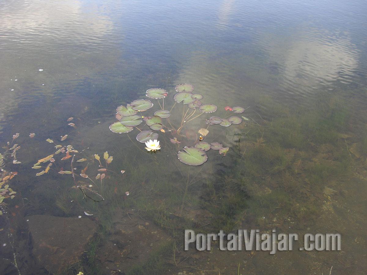 santiago de compostela 73 - parque natural granxa do xesto - nenufares